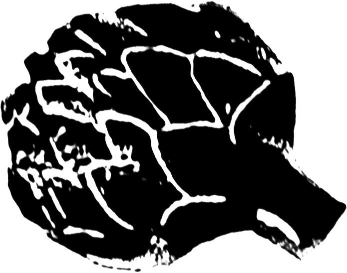 gravure brocolis